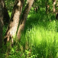 Солнышко В Траве (Sun In Grass), Меленки
