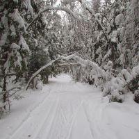 Лыжной тропой, Покров