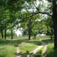 Oaks, Собинка