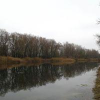 Река Бузулук побережье Алексеевки, Алексеевская