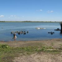 озеро Цаплино, Алексеевка, Алексеевская