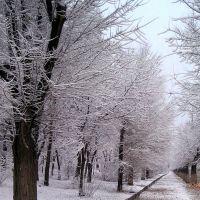 Зимняя аллея, Алущевск