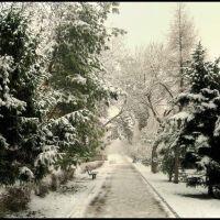 Зимняя аллея., Волгоград