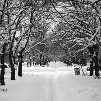 Зимняя дорожка., Волжский
