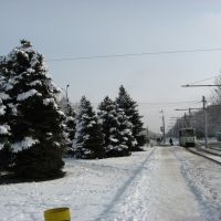 Площадь Карбышева, Волжский, зима, Волжский