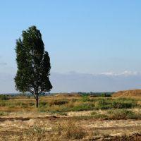 Одинокое степное дерево. The tree in the desert., Волжский