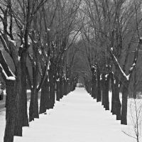 Зимняя аллейка., Волжский