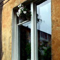 Цветы в окне. Flowers in the window., Волжский