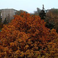 Осенний вид из окна 2. Autumn view from the window 2., Волжский