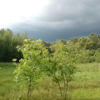 Лес, Елань