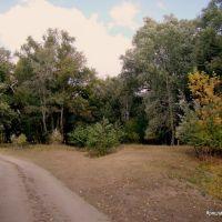 Лесная дорога, Иловля