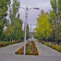 Сквер, Котово