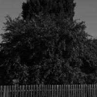 тополя хутор облив, Кумылженская