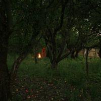 яблоневый сад вечером, Кумылженская