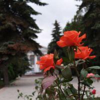 около ГДК, Михайловка