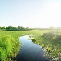 опять болото, Новониколаевский