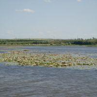 островок кувшинок, Рудня