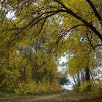 осень, лес, Светлый Яр