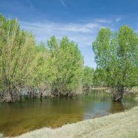 Тополя в воде / Poplar in water, Средняя Ахтуба