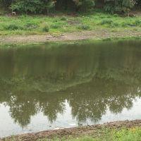 Россия: Вологда: река Вологда: отражение деревьев; 18:37 11.08.2006, Вологда