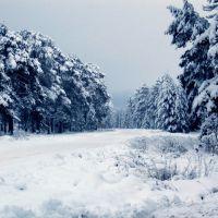Зимний лес, Липин Бор