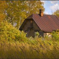 Золотая осень - Golden autumn, Сокол