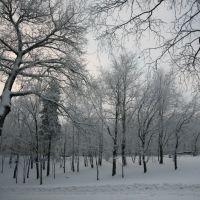 Пасмурный зимний день, Череповец