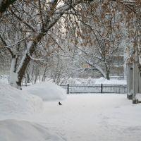 Белая зима и голубь., Череповец