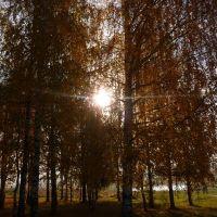 Парк у реки Угла, Шексна