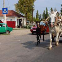 Полторы лошадиные силы, Бутурлиновка