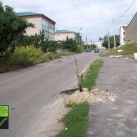 Верхний Мамон, дерево :o) (08-2011), Верхний Мамон