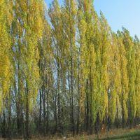 деревья у дороги, Воробьевка