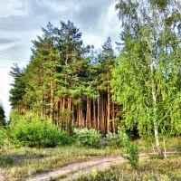 Хоперский лес, Новохоперск