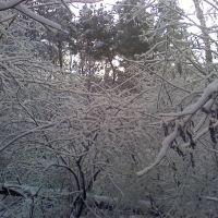 Зимний лес, Репьевка