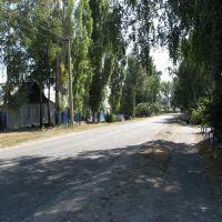 Rural street     . Улица село Репьевка, Репьевка