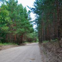 дорога на Новый поселок, Семилуки