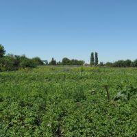 Урожай 2008, Таловая