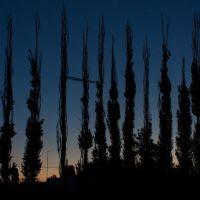 Populus pyramidalis, Терновка