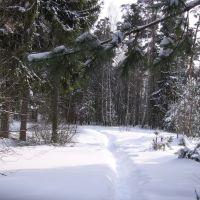 Снежная тропинка, Саров
