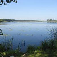 Большое Козино, пруд, Большое Козино