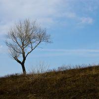 Одинокое дерево, Большое Пикино