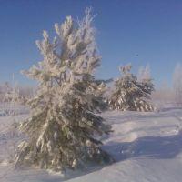 Сосны под снегом, Бутурлино