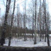 Березки, Володарск