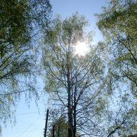 sunny day, Воскресенское