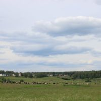 on the meadow, Выездное