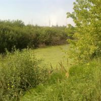 болото (02.08.2012), Горбатовка