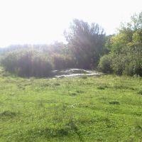 болото (17.08.2013), Горбатовка