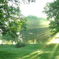 Sun rays & oaks, Керженец