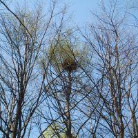 гнездо, Чкаловск