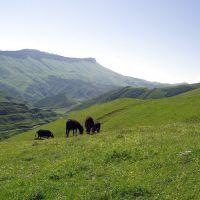 Landscape, Акуша